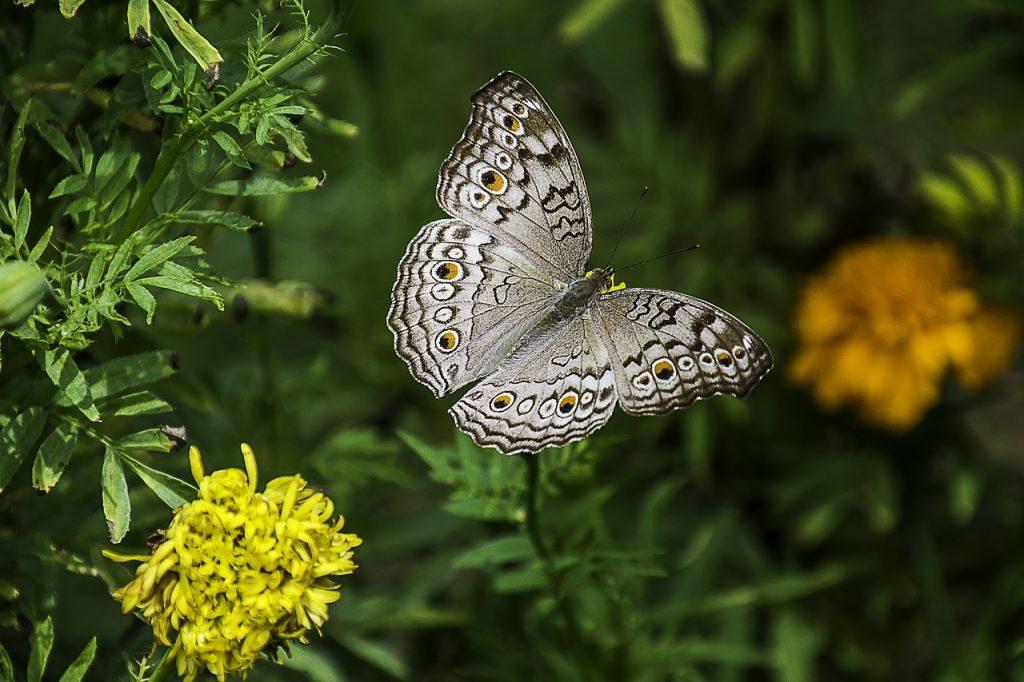 museo de historia natural nueva york mariposas